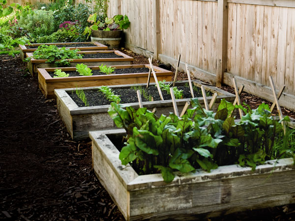 Charmant Here Is Advice On How To Build A Raised Garden Bed For Your Backyard. Raised  Garden Beds Are Fairly Easy To Construct And Even Easier To Maintain.